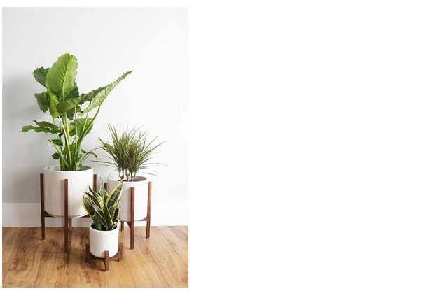 How to care for houseplants